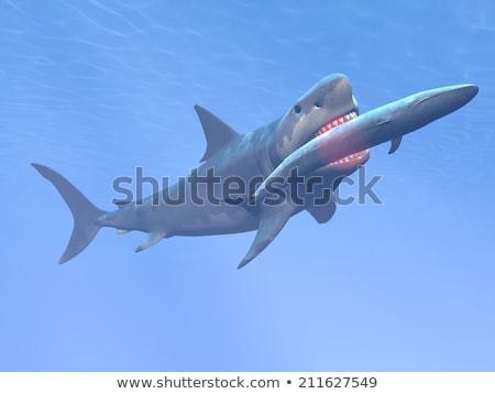 Köpekbalığı yeme mavi balina 3d render sualtı Stok fotoğraf © Elenarts