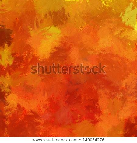 Oranje bloem natuur Stockfoto © ankarb