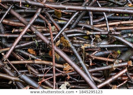 huş · ağacı · ahşap · arka · plan · çerçeve - stok fotoğraf © hermione
