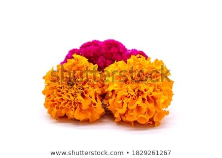 een · oranje · bloem · geïsoleerd · witte - stockfoto © camel2000