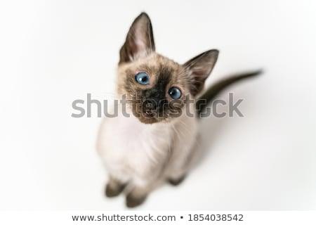 タイ かわいい 子猫 狩猟 草 自然 ストックフォト © Agatalina