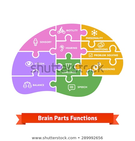 infographic parts and functions of brain stock photo © artisticco