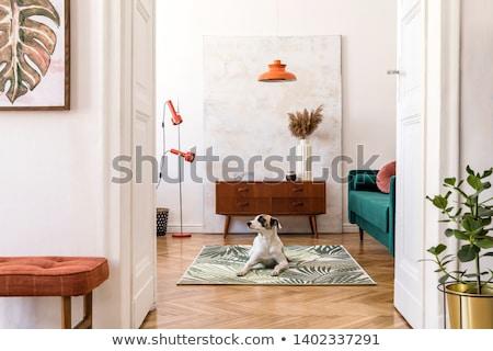 сонный · Beagle · макроса · выстрел · собаки · носа - Сток-фото © klinker