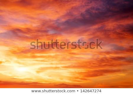 ateşli · gün · batımı · siluet · orman · bulutlu · plaj - stok fotoğraf © juhku