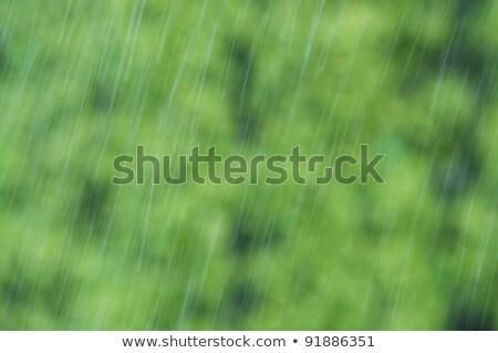 Objętych w dół zielone Zdjęcia stock © tarczas
