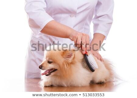 Veteriner köpek yalıtılmış boyun stetoskop Stok fotoğraf © dadoodas