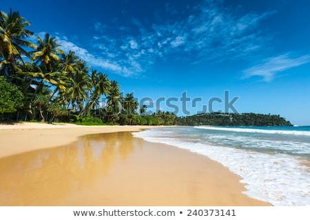 idílico · praia · Sri · Lanka · tropical · paraíso · árvore - foto stock © dolgachov