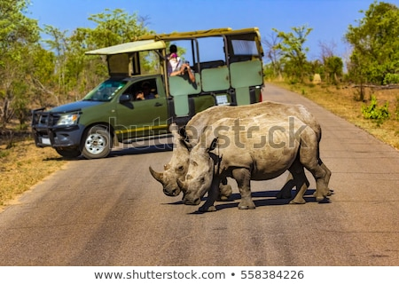 サイド · プロファイル · 白 · サイ · 公園 · 南アフリカ - ストックフォト © simoneeman