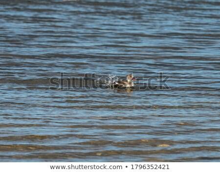 úszik víz park természet madár tó Stock fotó © simoneeman