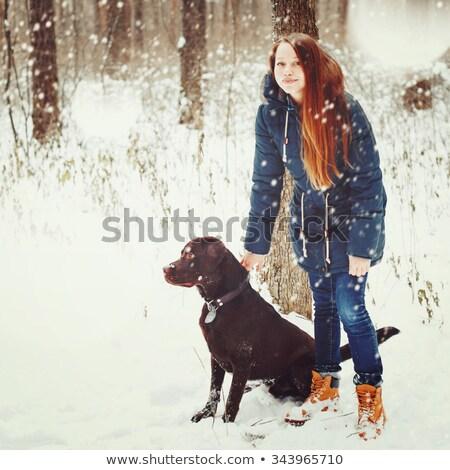 довольно коричневый Лабрадор ретривер зима лес избирательный подход Сток-фото © dariazu