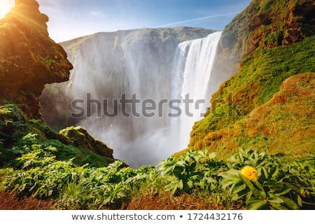 Escena agua corriente ilustración forestales paisaje Foto stock © bluering