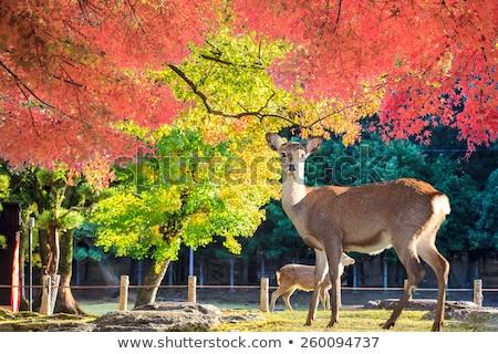 парка Япония святыня дерево лес пейзаж Сток-фото © daboost