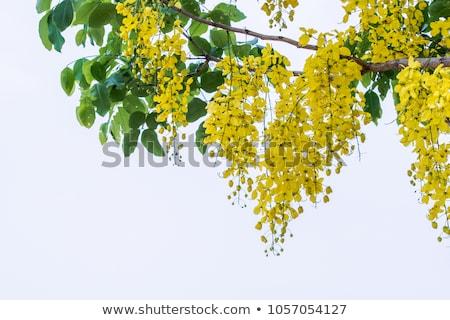 синий · Flying · цветы · вектора · цветочный · лепестков - Сток-фото © kostins