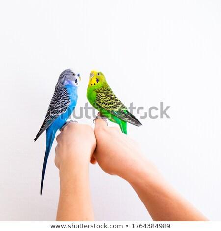 Ptaków para zwierząt ilustracja pary strona Zdjęcia stock © lenm