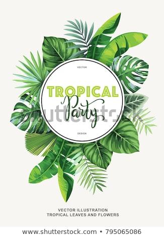Yeşil daire çerçeve tropikal yaprakları plaj Stok fotoğraf © gladiolus