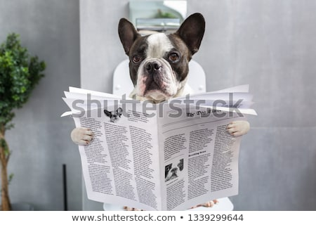 Foto stock: Dog On Toilet Seat Reading Newspaper