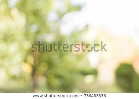 yakacak · odun · kömür · parti · doğa - stok fotoğraf © thp