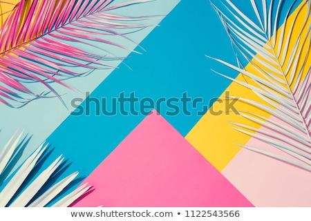 Verde folha de palmeira azul cópia espaço verão traçado Foto stock © artjazz