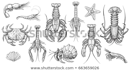 Stock photo: Crawfish and Fishes Sketch Vector Illustration