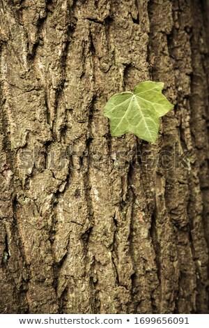Кора коричневый шаблон текстуры почвы Сток-фото © lunamarina