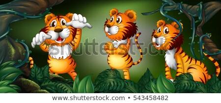 Trzy tygrysy Rainforest ilustracja drewna lasu Zdjęcia stock © colematt