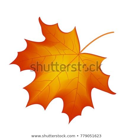 Feuille d'érable feuillage isolé icône vecteur Photo stock © robuart