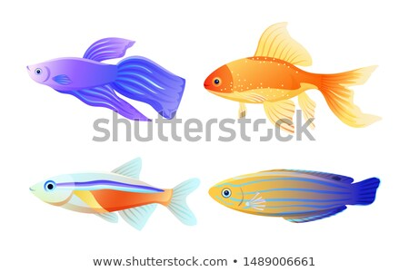 Mavi çizgili akvaryum balığı karikatür poster nadir Stok fotoğraf © robuart