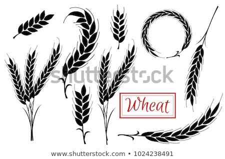 Stockfoto: Wheat Flat Concept Icons
