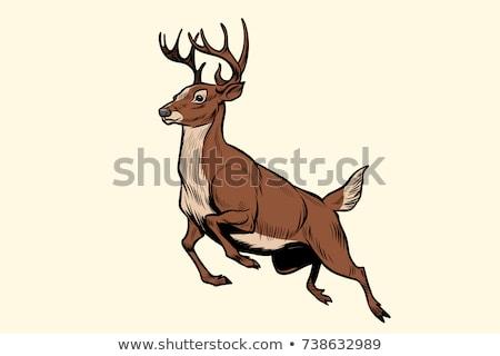 Animale contorno cervo esecuzione illustrazione natura Foto d'archivio © colematt