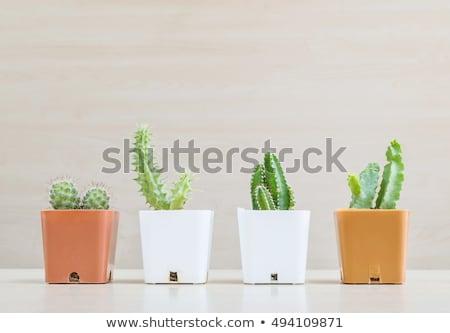 Stock photo: Four pots of plants