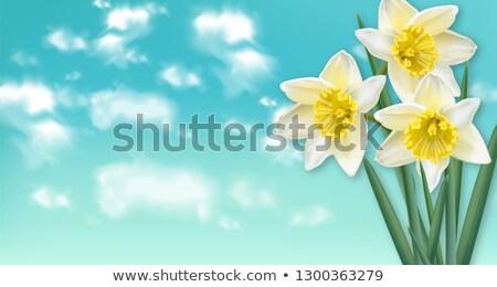 primavera · carta · fiori · bouquet · cielo · blu · vettore - foto d'archivio © frimufilms