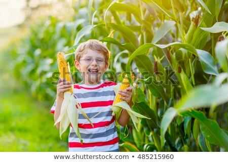 alan · mısır · ağustos · doğa · manzara · sağlık - stok fotoğraf © elenabatkova
