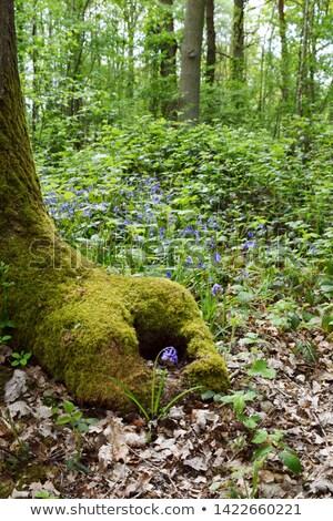 Stockfoto: Voet · boomstam · groeien · bloem · boom · bos