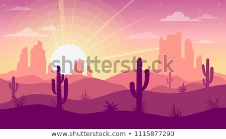 cacto · deserto · pôr · do · sol · cena · planta · montanhas - foto stock © bluering