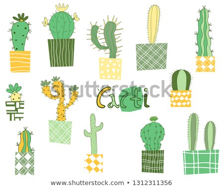 cute and modern vector geometric cactus plants in elegant style in green yellow and gray stock photo © pravokrugulnik