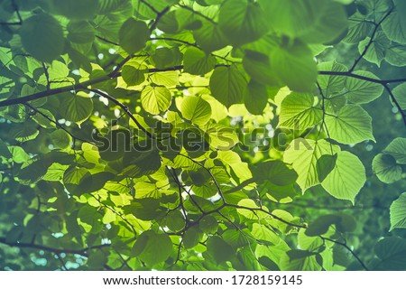 tree with green leaves Stock photo © LoopAll