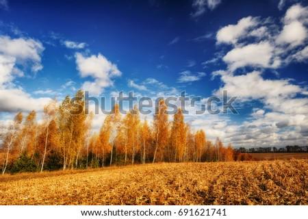 Nuvens pequeno floresta céu Foto stock © samsem