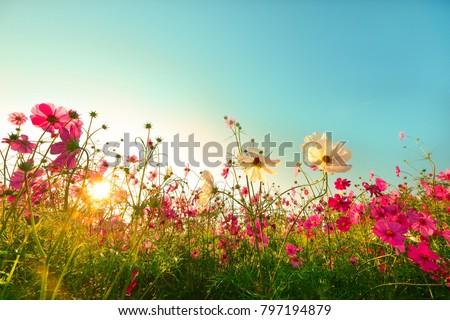 花 庭園 遅い 午後 葉 美 ストックフォト © artistrobd