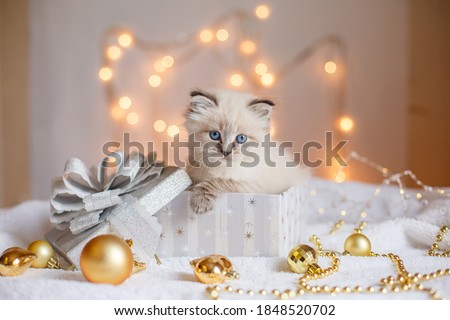 playful kitten christmas background stock photo © marimorena