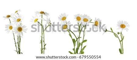 желтый белый Daisy цветок свет Сток-фото © tang90246
