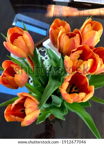 Closeup of fully bloomed tulip Stock photo © bdspn