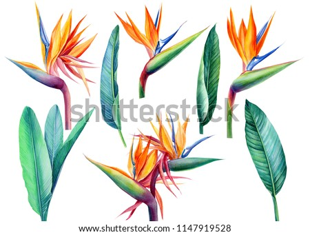 Bird of paradise flower Stock photo © boggy