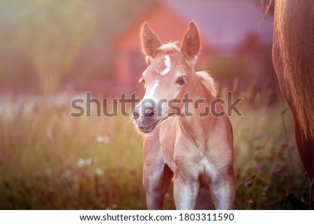Beautiful horse Stock photo © IMaster