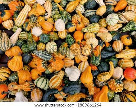 different autumn shapes and kinds of pumpkins at the farm stock photo © dash