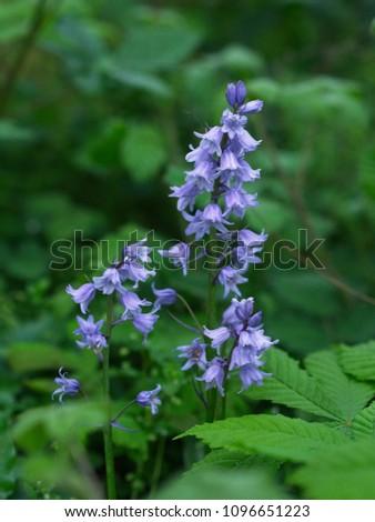 青 スペイン語 花 フィールド 花 自然 ストックフォト © dmitry_rukhlenko