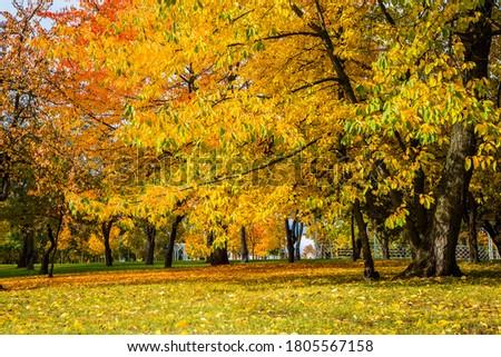Stock photo: autumn in city park