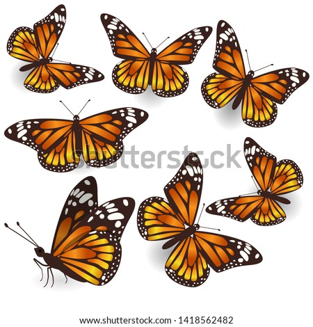 Set of orange butterflies monarchs Stock photo © blackmoon979