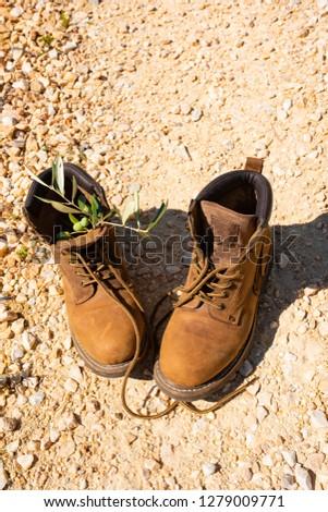 Kırmak Toskana ayakkabı zeytin güneş manzara Stok fotoğraf © Dar1930