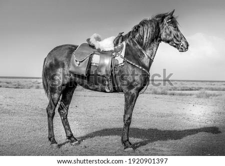 Ló olajbogyó liget sereg Stock fotó © suerob
