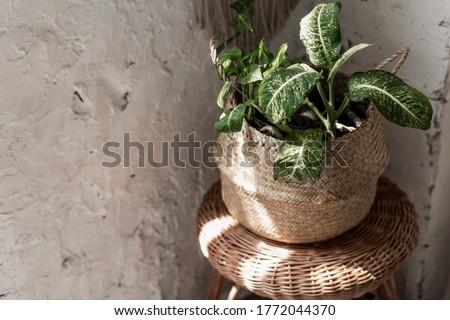 decorative plant Stock photo © tony4urban